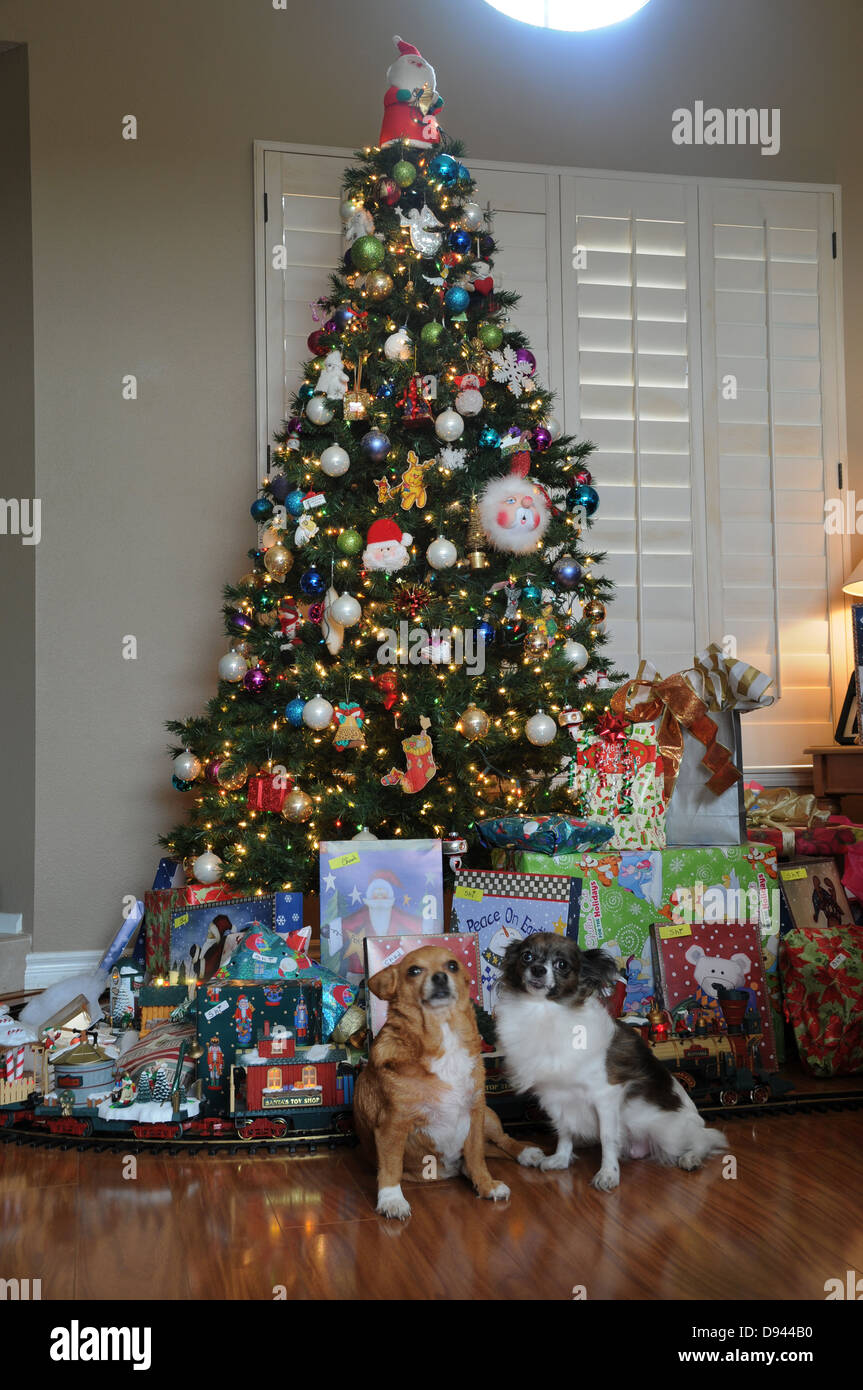 two pet chihuahuas standing in front of home decorated christmas tree with presents and toy train