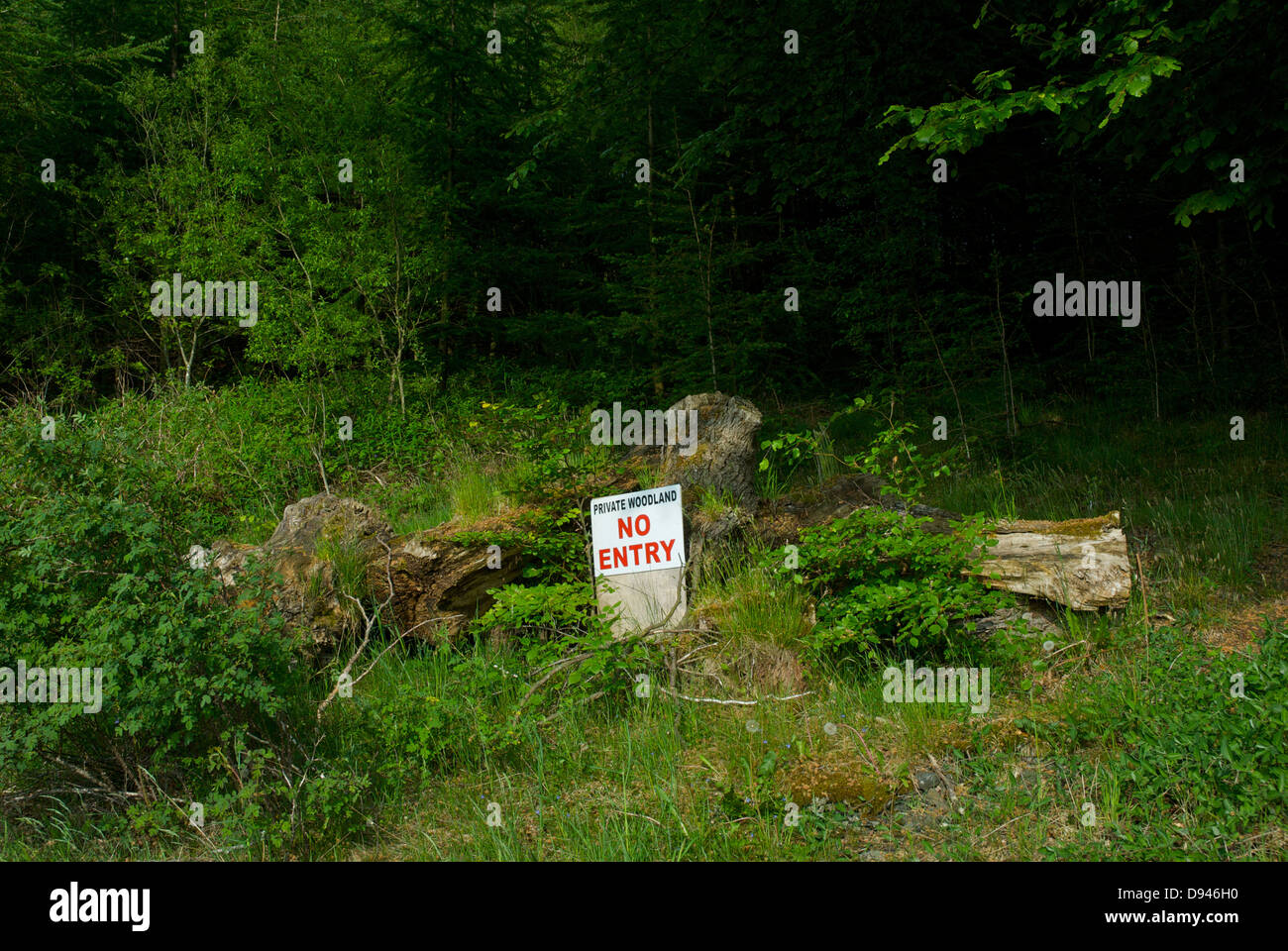 Sign - 'Private Woodland, No Entry' - in a wood, Cumbria, England UK - Stock Image