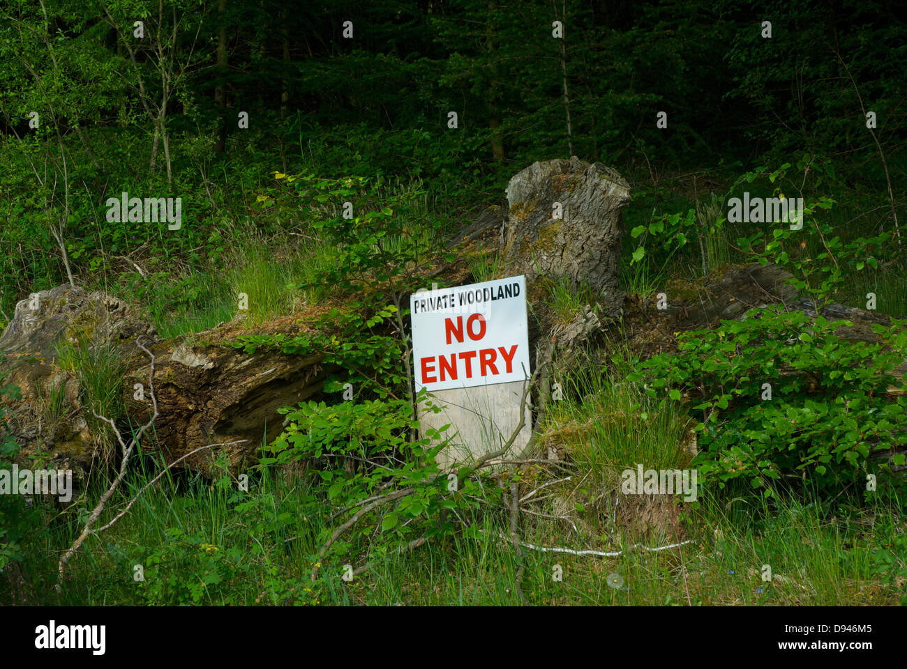 Sign - 'Private Woodland, No Entry' - in a wood, Cumbria, England UK Stock Photo