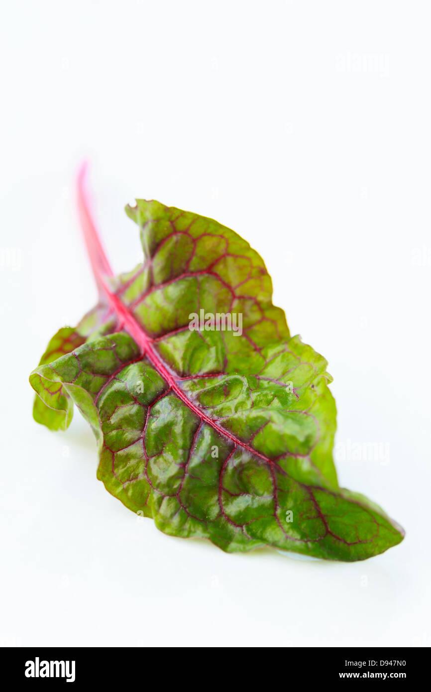 Rainbow Swiss chard  leaf on white background - Stock Image