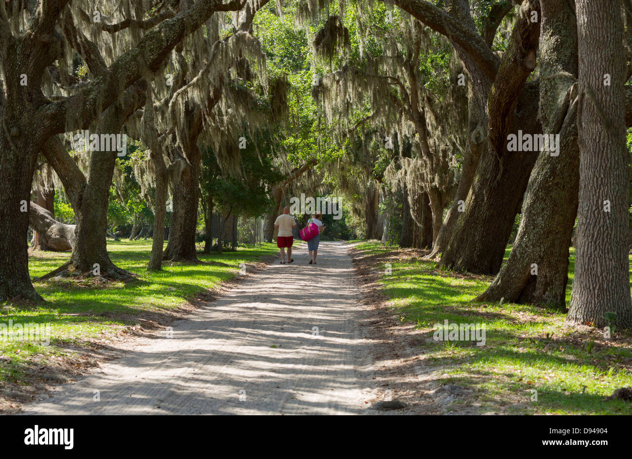 Spanish moss drapes live oaks lining the old plantation road at Dungeness, Cumberland Island, Georgia Stock Photo