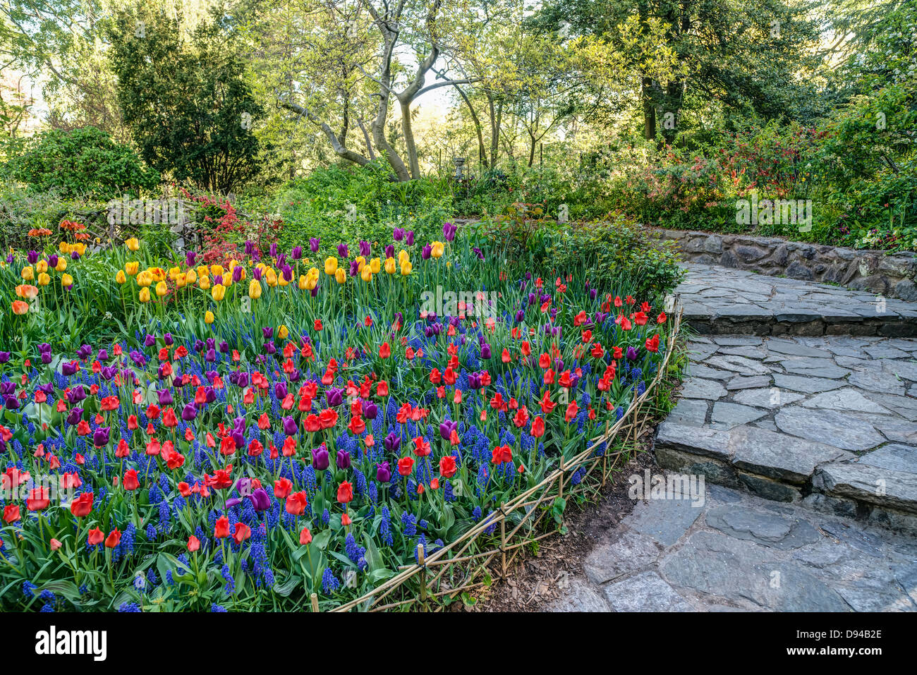 central park new york city shakespeare garden in spring - Shakespeare Garden Central Park