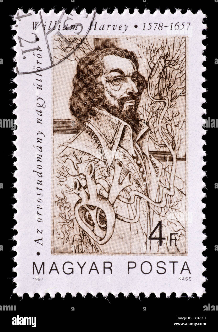 Postage stamp from Hungary depicting William Harvey, early medical pioneer and anatomist. - Stock Image
