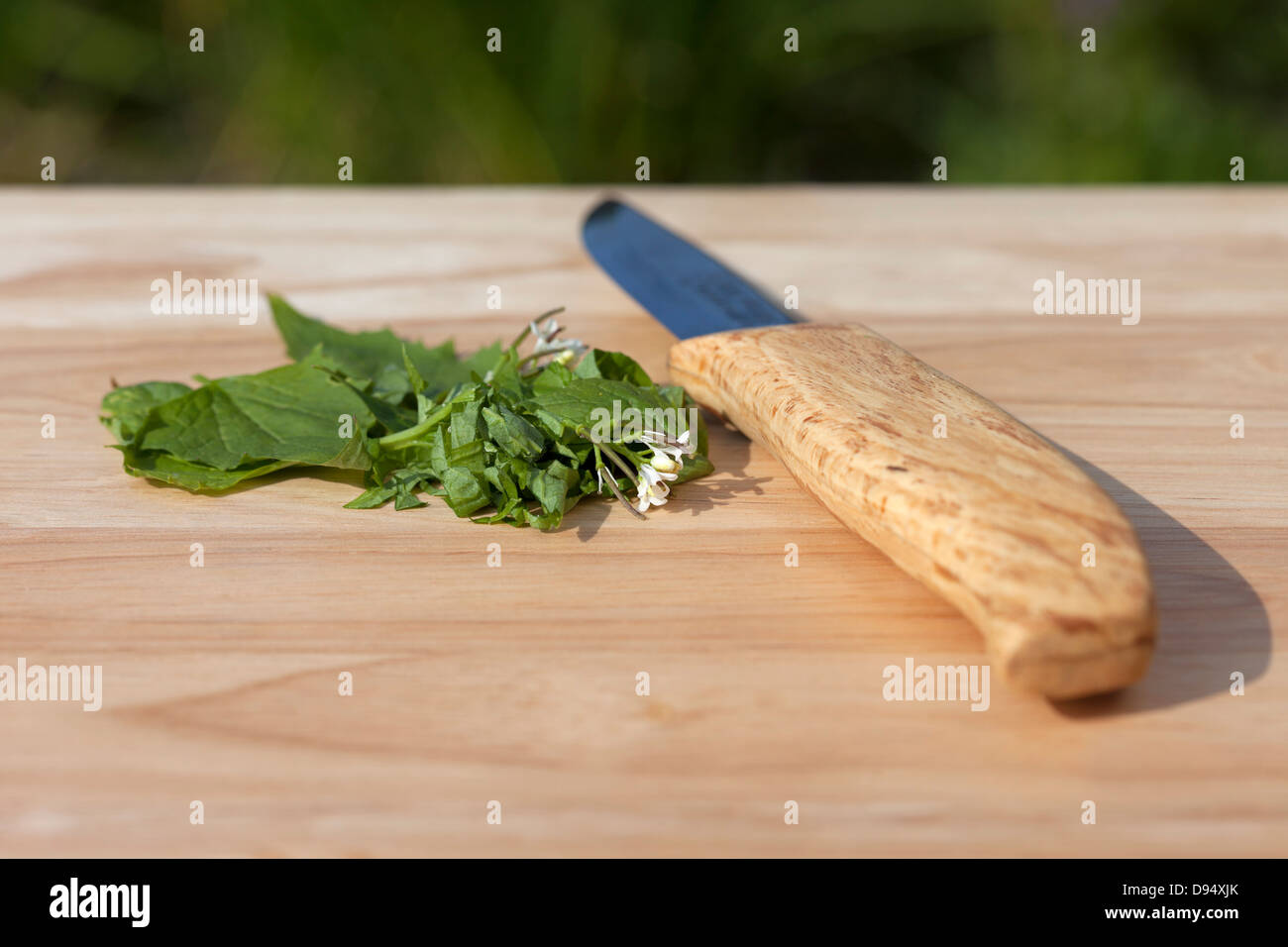 Freshly Chopped Hedge Garlic Alliaria petiolata (also Known as Jack by the Hedge) on a Wooden Chopping Board with Knife UK Stock Photo