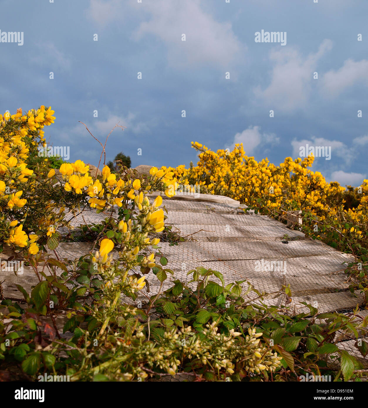 wooden ramp to freeride withGorses, planks and sky - Stock Image