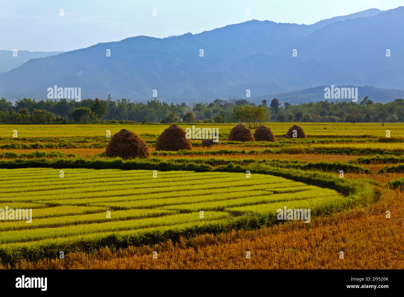 The fertile valley surrounding KENGTUNG or KYAINGTONG is used to grow RICE - MYANMAR Stock Photo