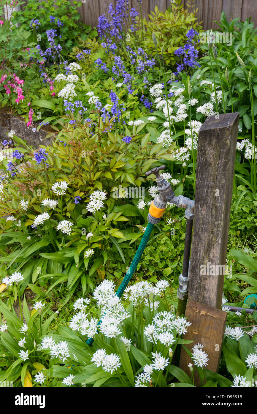 Garden Tap Stock Photos & Garden Tap Stock Images - Alamy