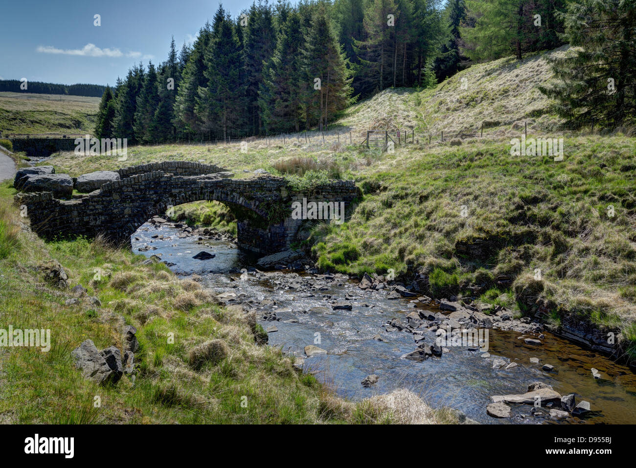 Stone bridge crossing a stream with conifer plantation beyond - Stock Image
