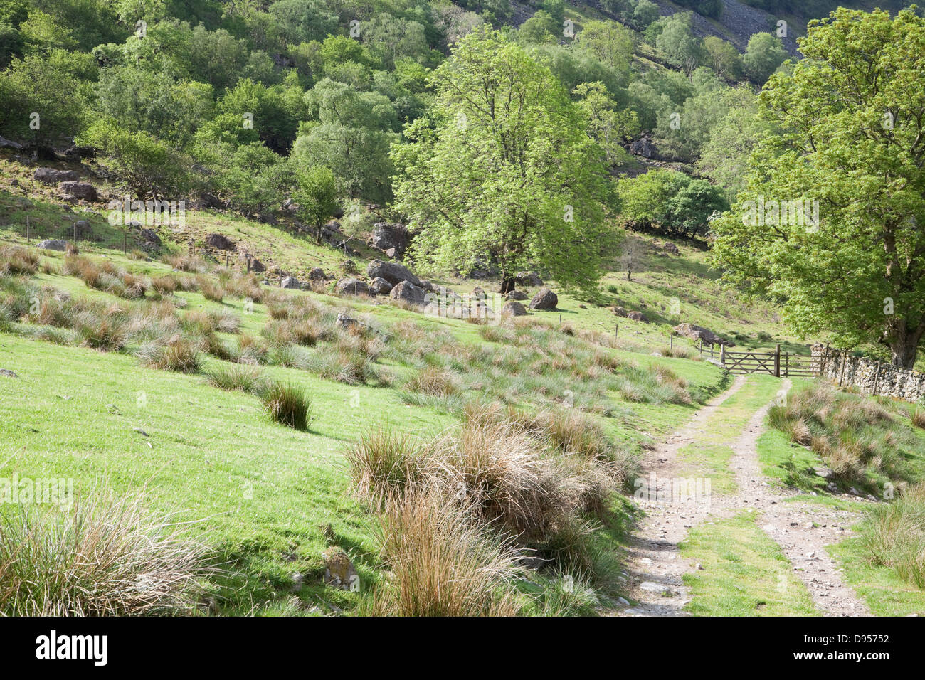 The Allerdale Ramble path in Borrowdale - Stock Image