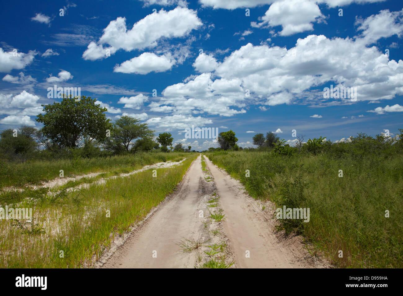 Track from Dobe Border to Nokaneng, North-western Botswana, Africa - Stock Image