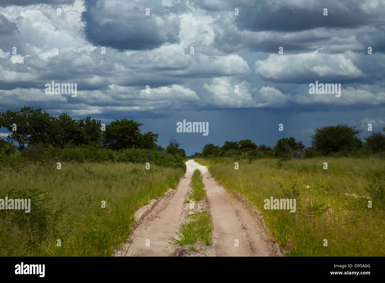 Track from Dobe Border to Nokaneng, and storm clouds, North-western Botswana, Africa Stock Photo