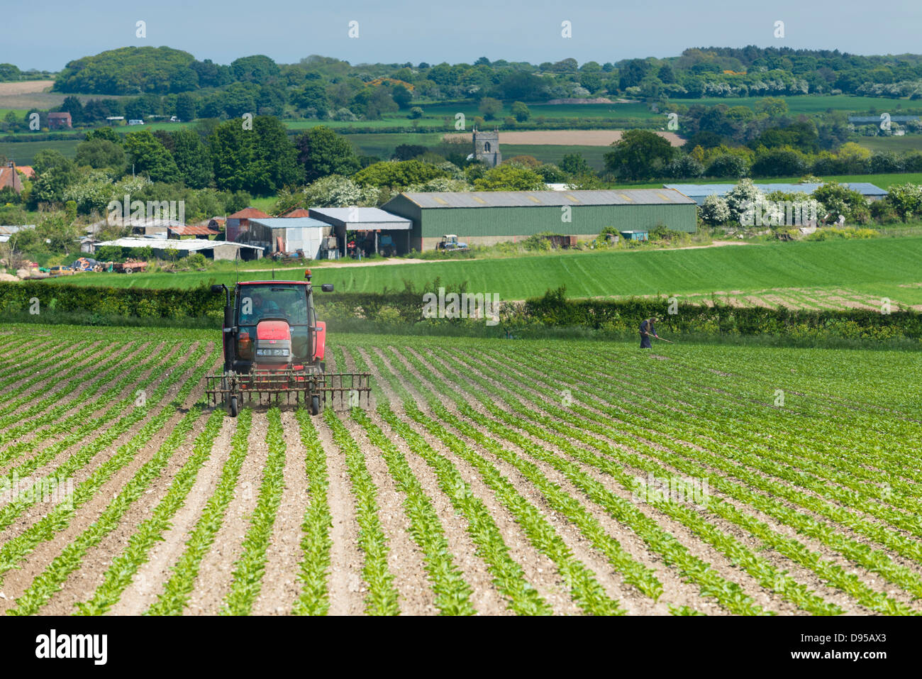Tractor hoeing sugarbeet with a front mounted hoe, showing surrounding countryside, church, and farm buildings, - Stock Image