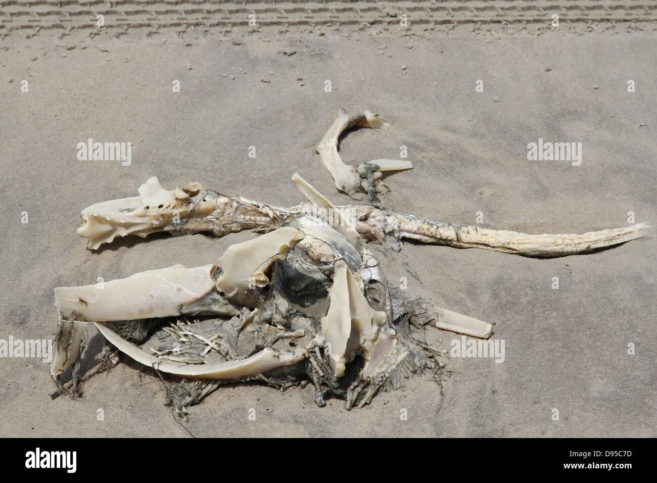 Pile Of Bones Stock Photos & Pile Of Bones Stock Images ...