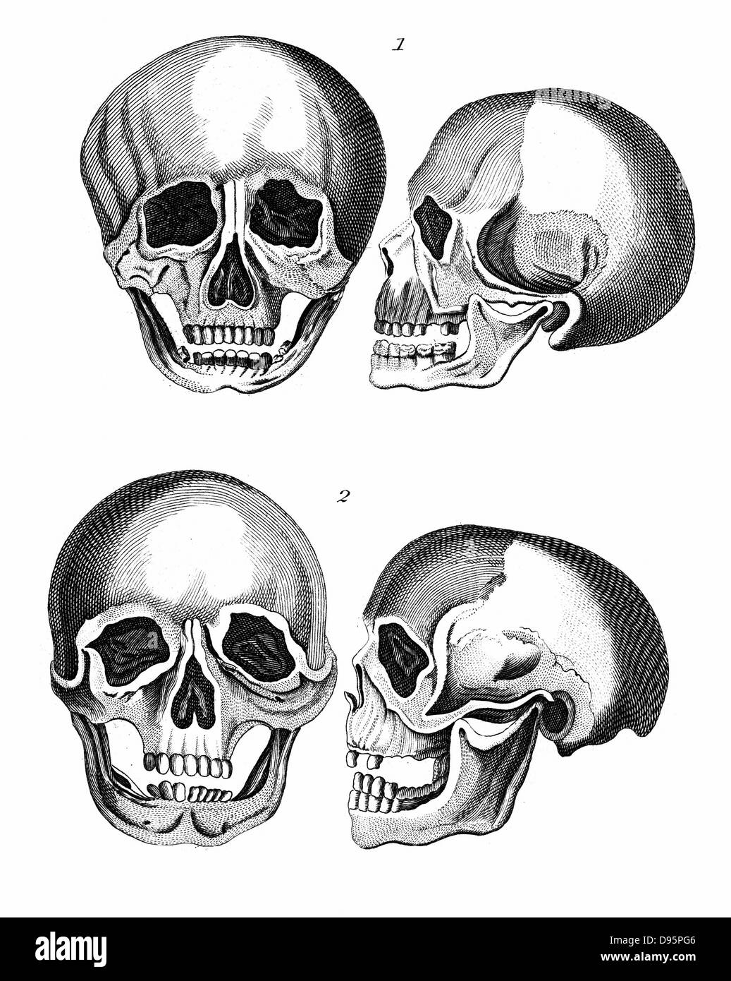 1: Germanic skull 'with all the marks of a European head'. 2: African skull: 'The arching of the forehead - Stock Image