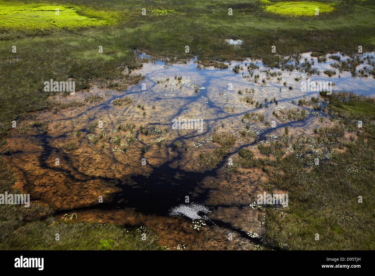Animal tracks through the swamp, Okavango Delta, Botswana, Africa- aerial - Stock Image