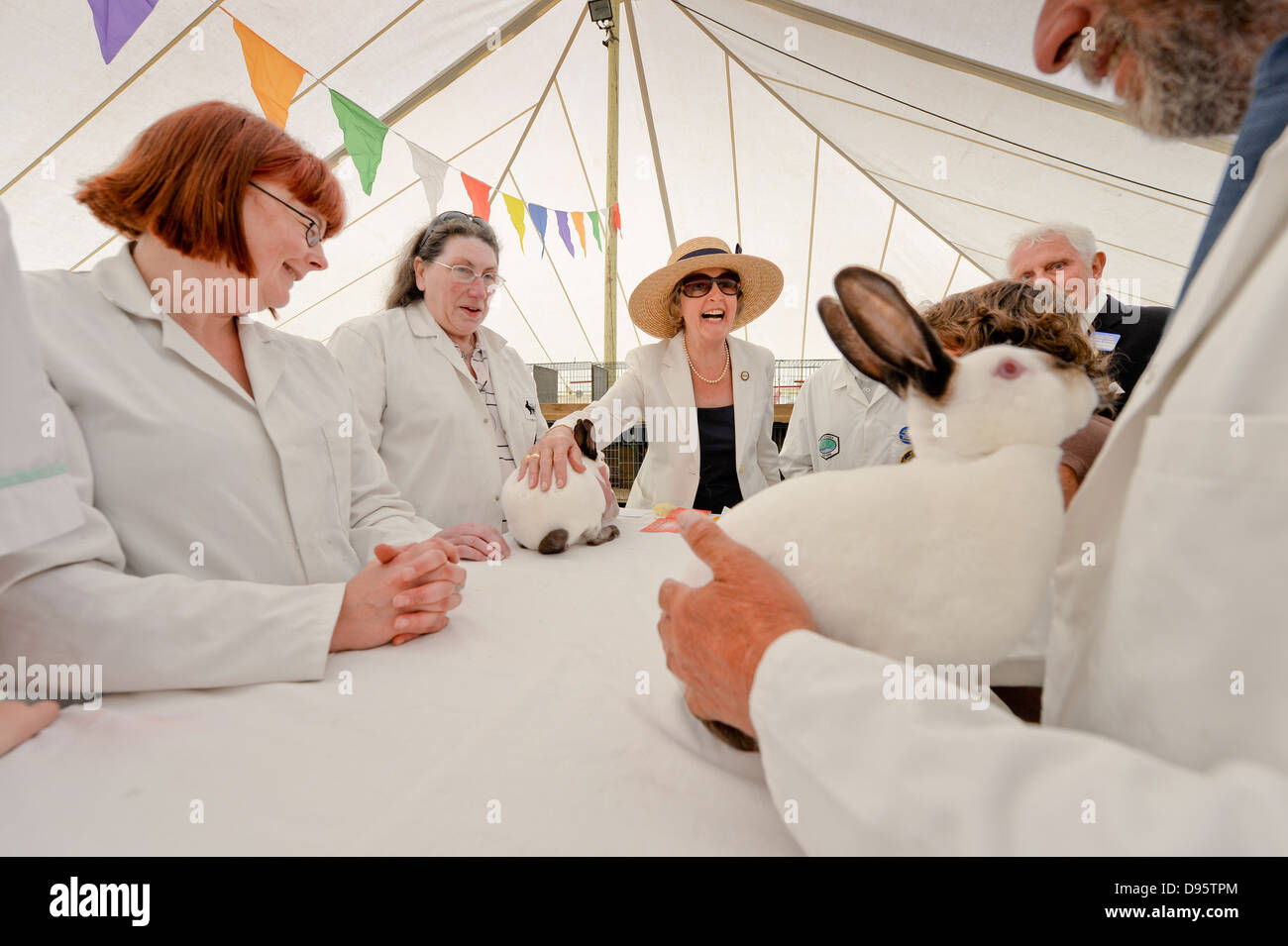 Actress Penelope Keith President of the the South of England Agricultural Society tours the 2013 South of England - Stock Image