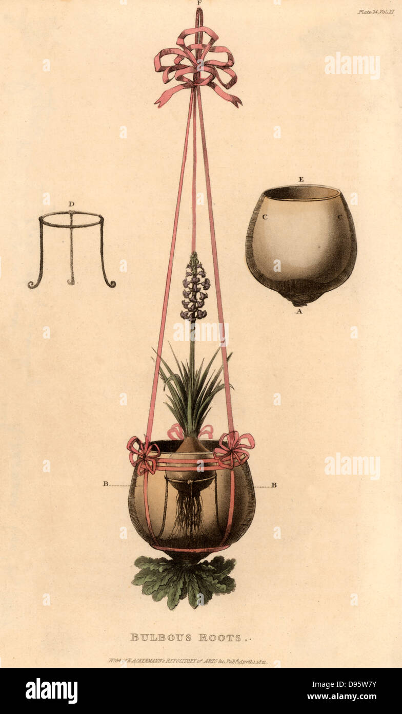 Hyacinth vase which could be suspended.  The bulb was placed on a metal stand in a glass bowl containing water. Stock Photo