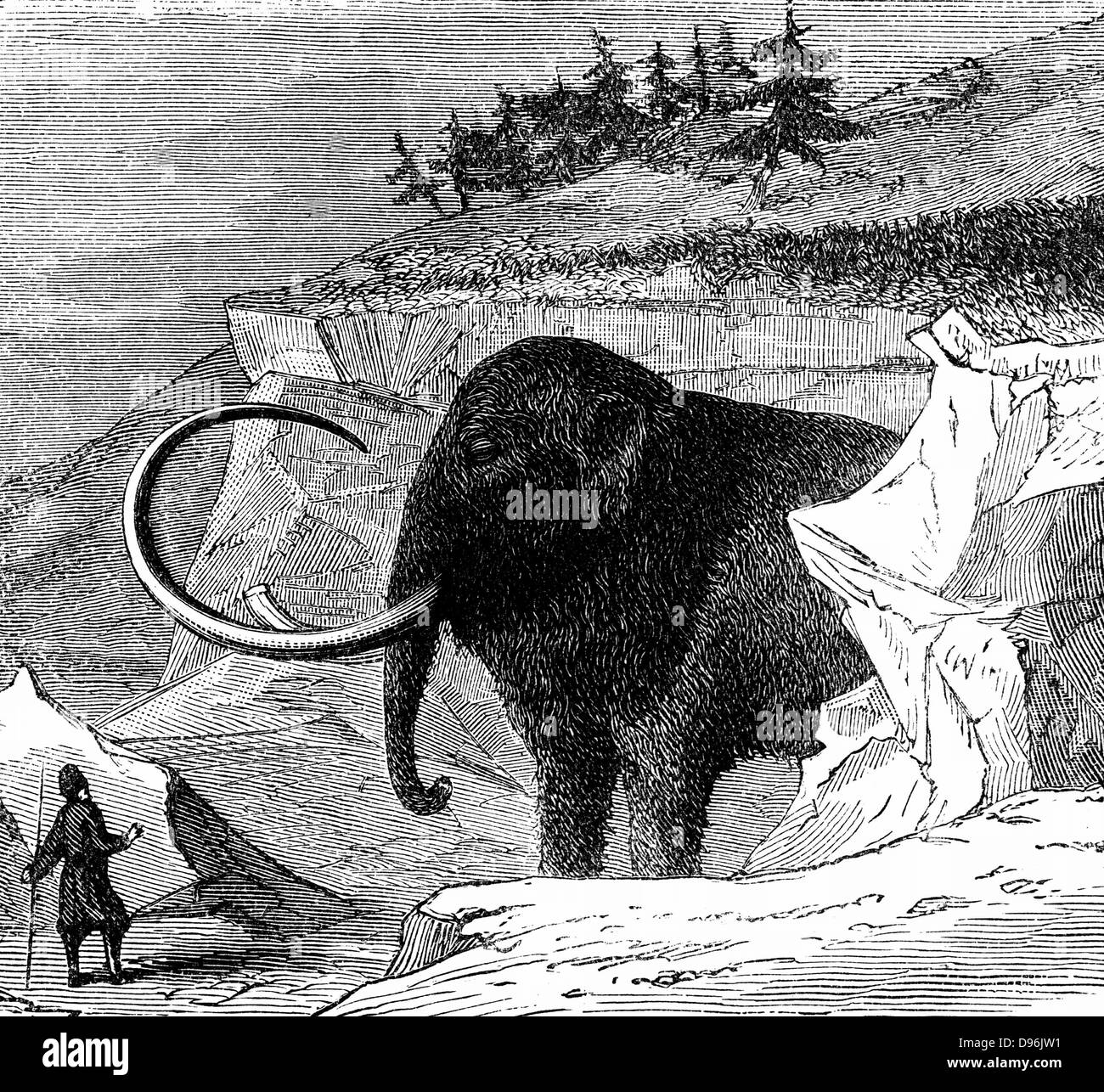 Woolly mammoth approximately 9ft high and 16ft long, discovered frozen in a block of ice in Siberia, 1779. Engraving - Stock Image