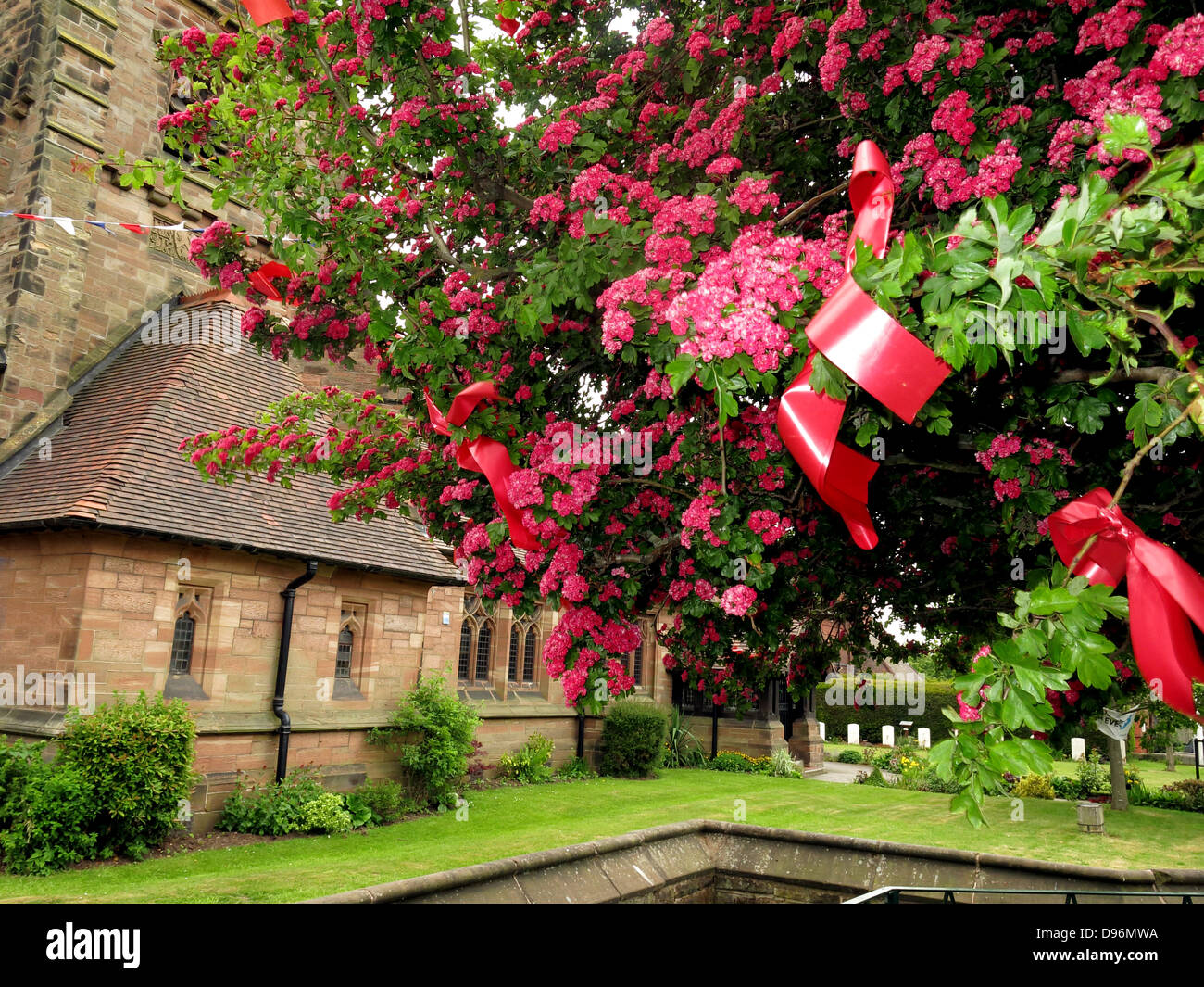 "The famous Thorn tree at Appleton Thorn village, South Warrington, England  dressed for the annual June  ""Bawming Stock Photo"