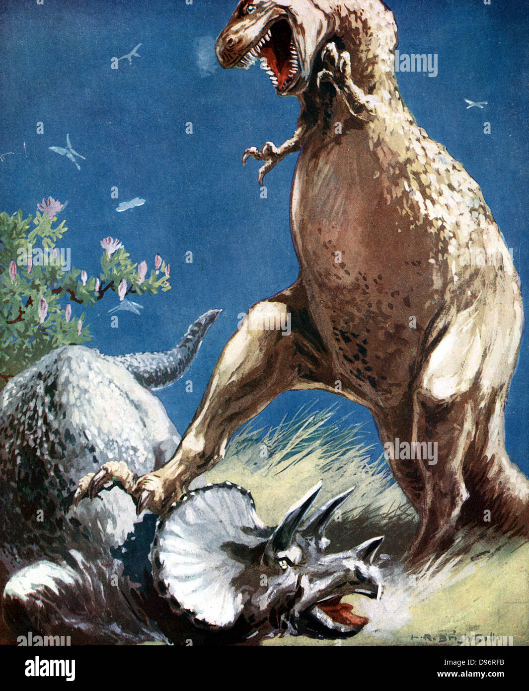 Tricerotops, a horned dinosaur, held down by Tyrannosaur.  Artist's reconstruction of fight between two giant - Stock Image