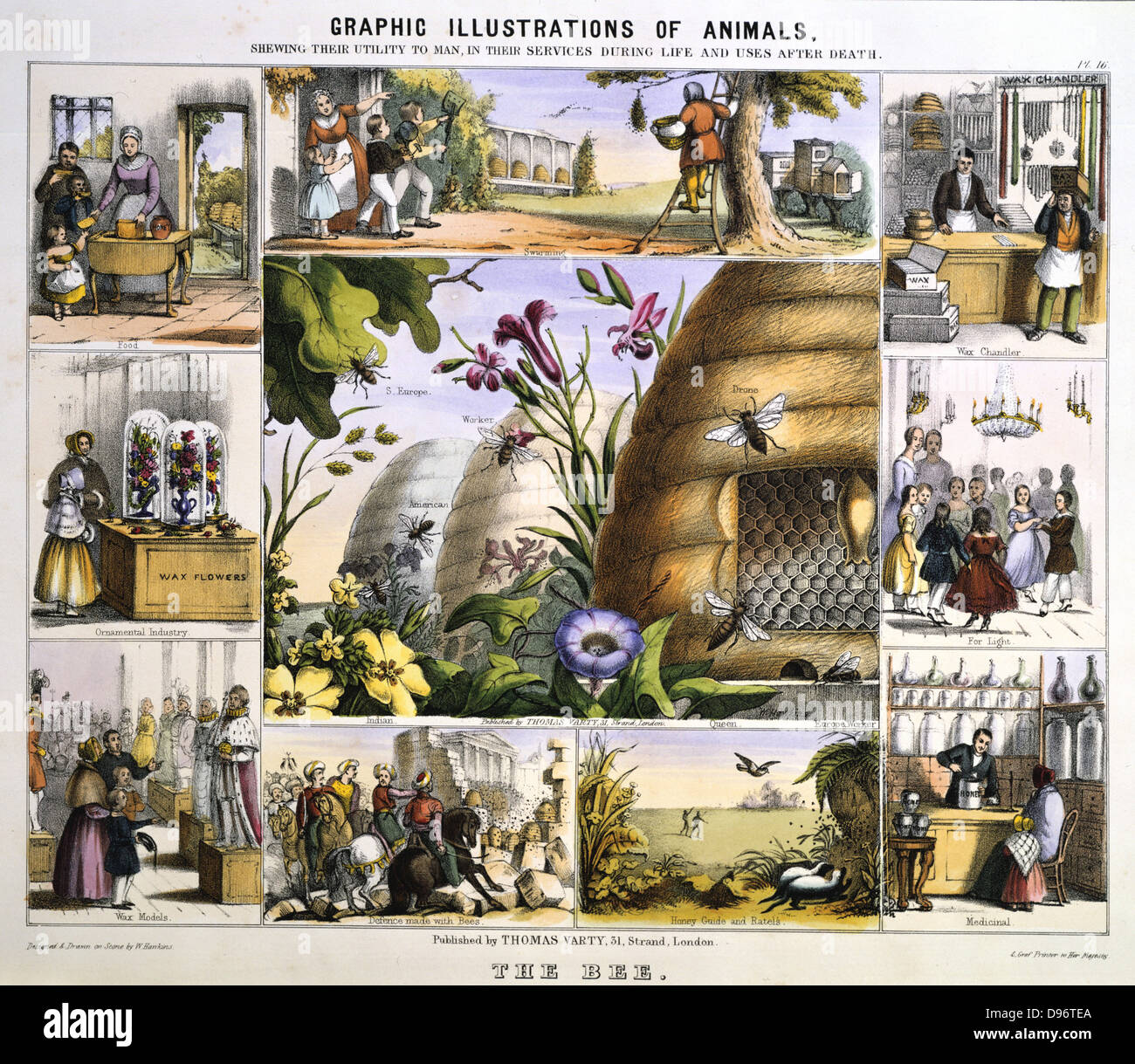 Wild and Honey Bees: Honey; Wax; Light; Wax-works. Hand-coloured lithograph published London c1850. From 'Graphic - Stock Image