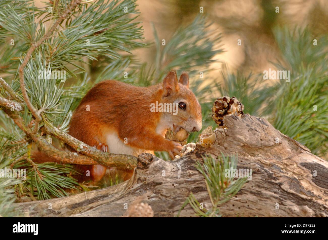 more photos 042e4 23e29 D97232 Stock Photos & D97232 Stock Images - Alamy