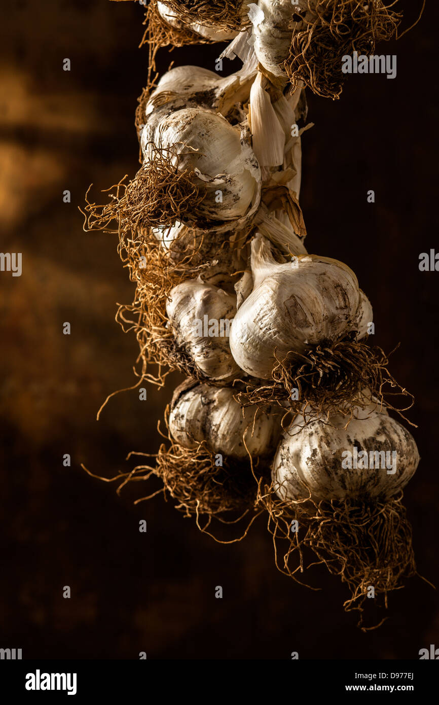 Hanging Garlic Plait - Stock Image