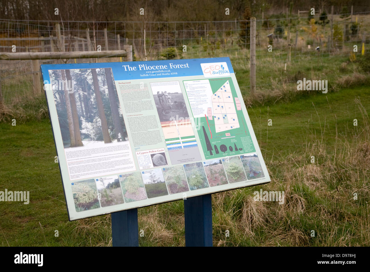 Information board for the Pliocene forest planted at Sutton Knoll SSSI geological site, Sutton, Suffolk, England - Stock Image