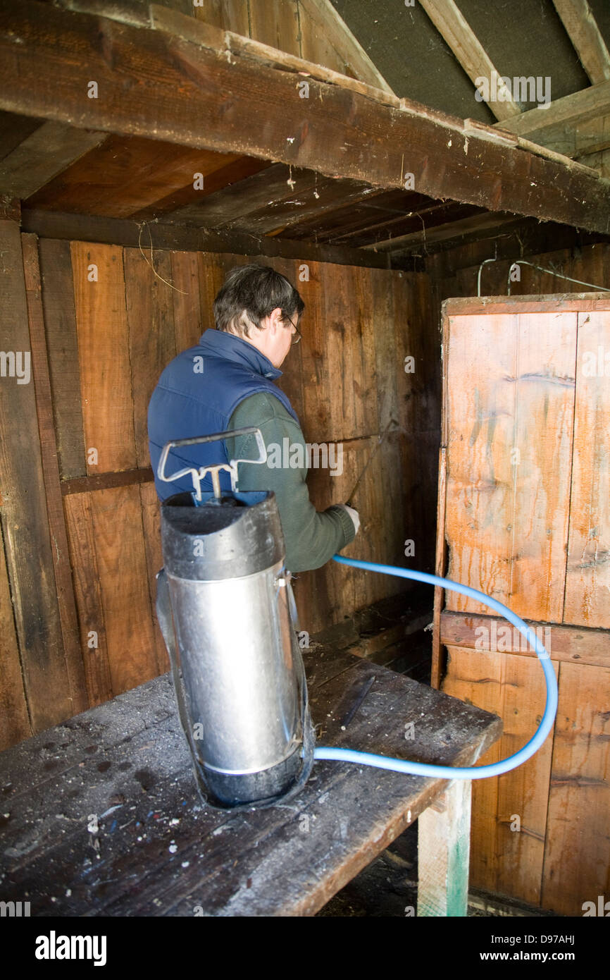 Man treating woodworm in a wooden barn with boron spray, UK - Stock Image