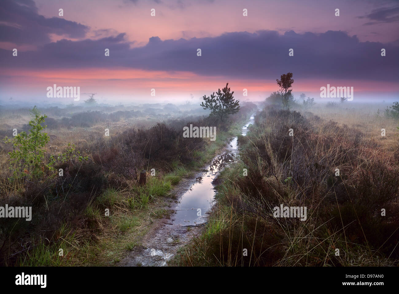 wet narrow path in fog over swamps, Drenthe, Netherlands - Stock Image