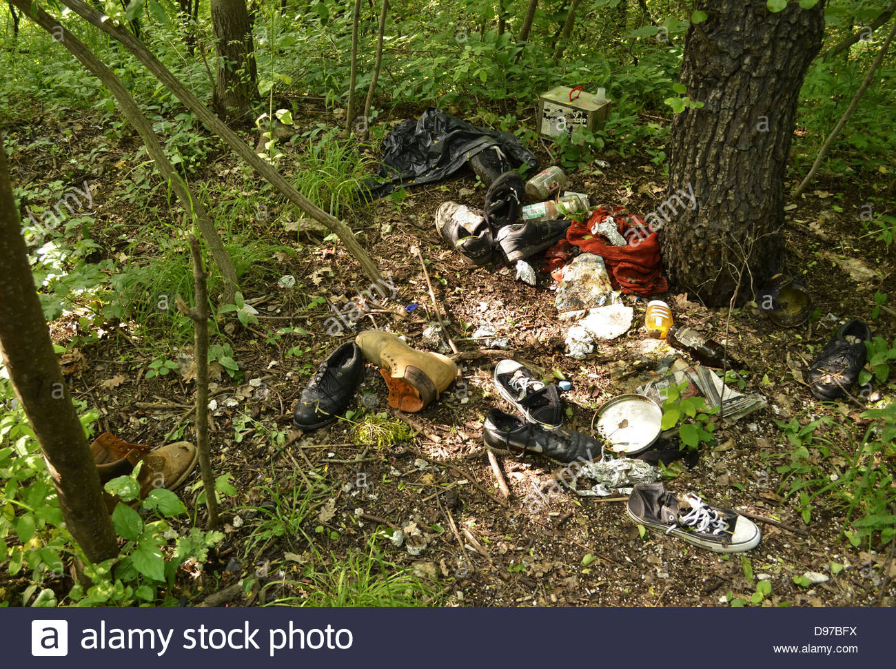 Garbage dumped in the forest - Stock Image