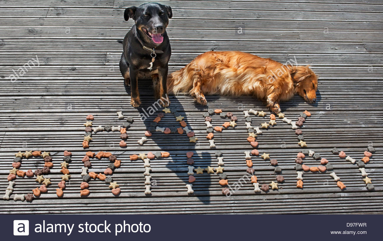 Two Pet Dogs Sitting On A Deck With Happy Birthday Written Using Dog Biscuits