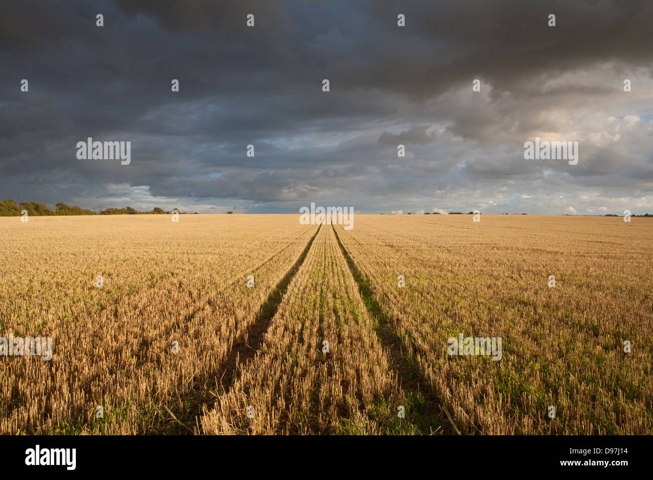 ENGLAND; NORFOLK; THORNHAM; PERSPECTIVE; LINES; SUNLIGHT; FIELD - Stock Image