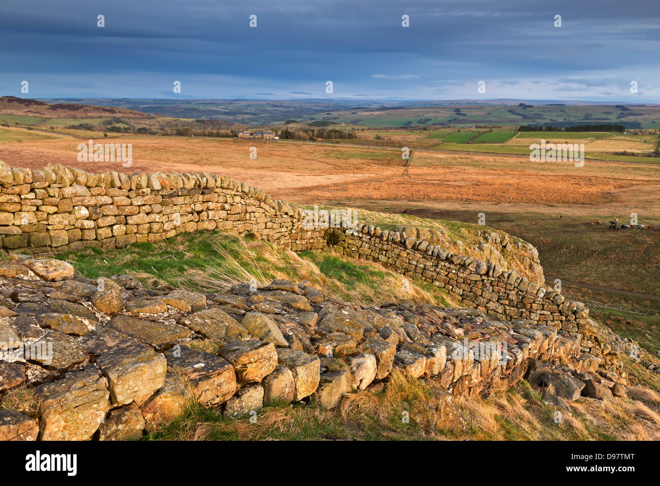 Hadrian's Wall on top of Steel Rigg in Northumberland National Park, Northumberland, England. Spring (April) - Stock Image