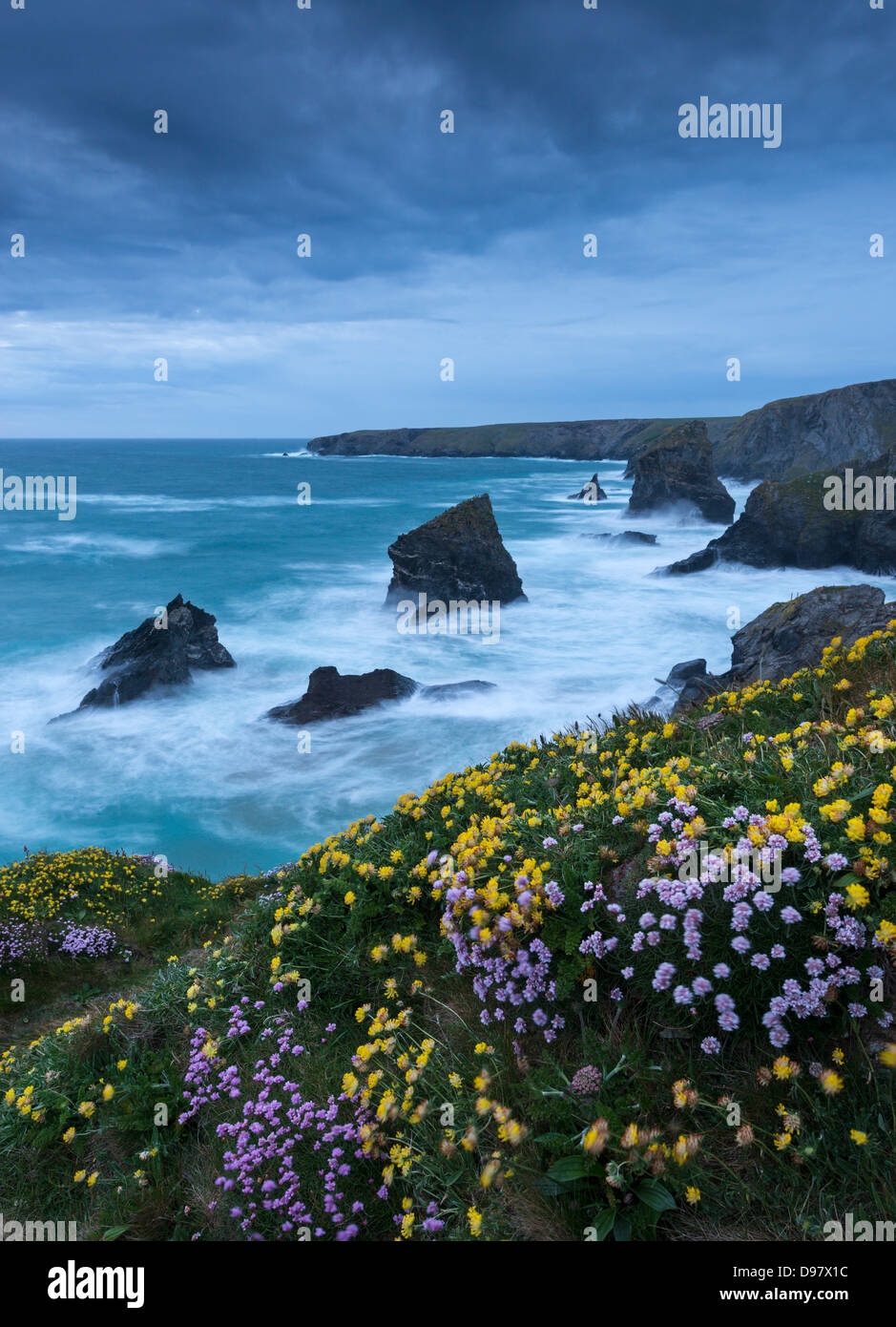 Spring wildflowers growing on the clifftops at Bedruthan Steps, Cornwall, England. May 2013. - Stock Image
