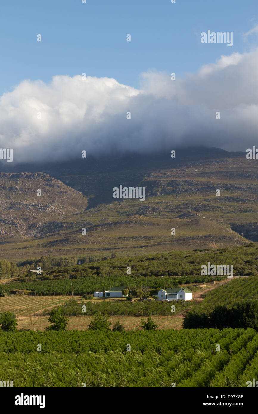 View over the Vines, Robertson, Western Cape,  South Africa Stock Photo