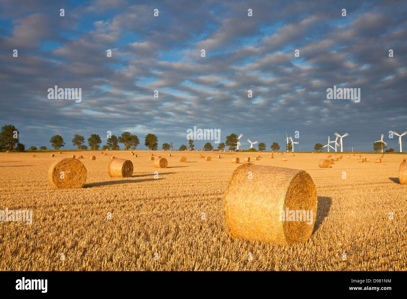 Hay Bales at first light in front of West Somerton windfarm in the distance - Stock Image