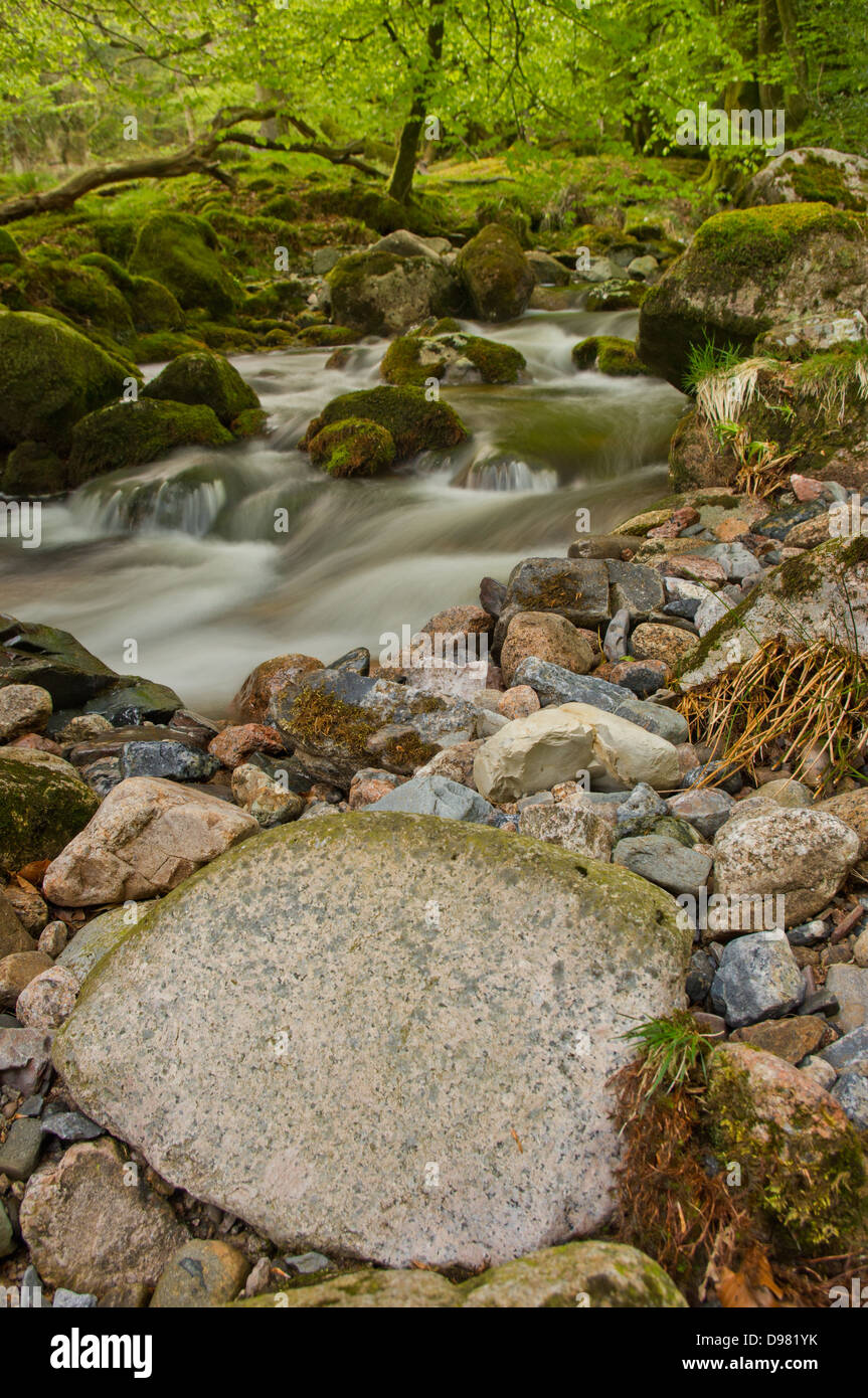 The River Yealm descending through a set of whitewater rapids in Dendles Wood - a National Nature Reserve On Dartmoor, - Stock Image