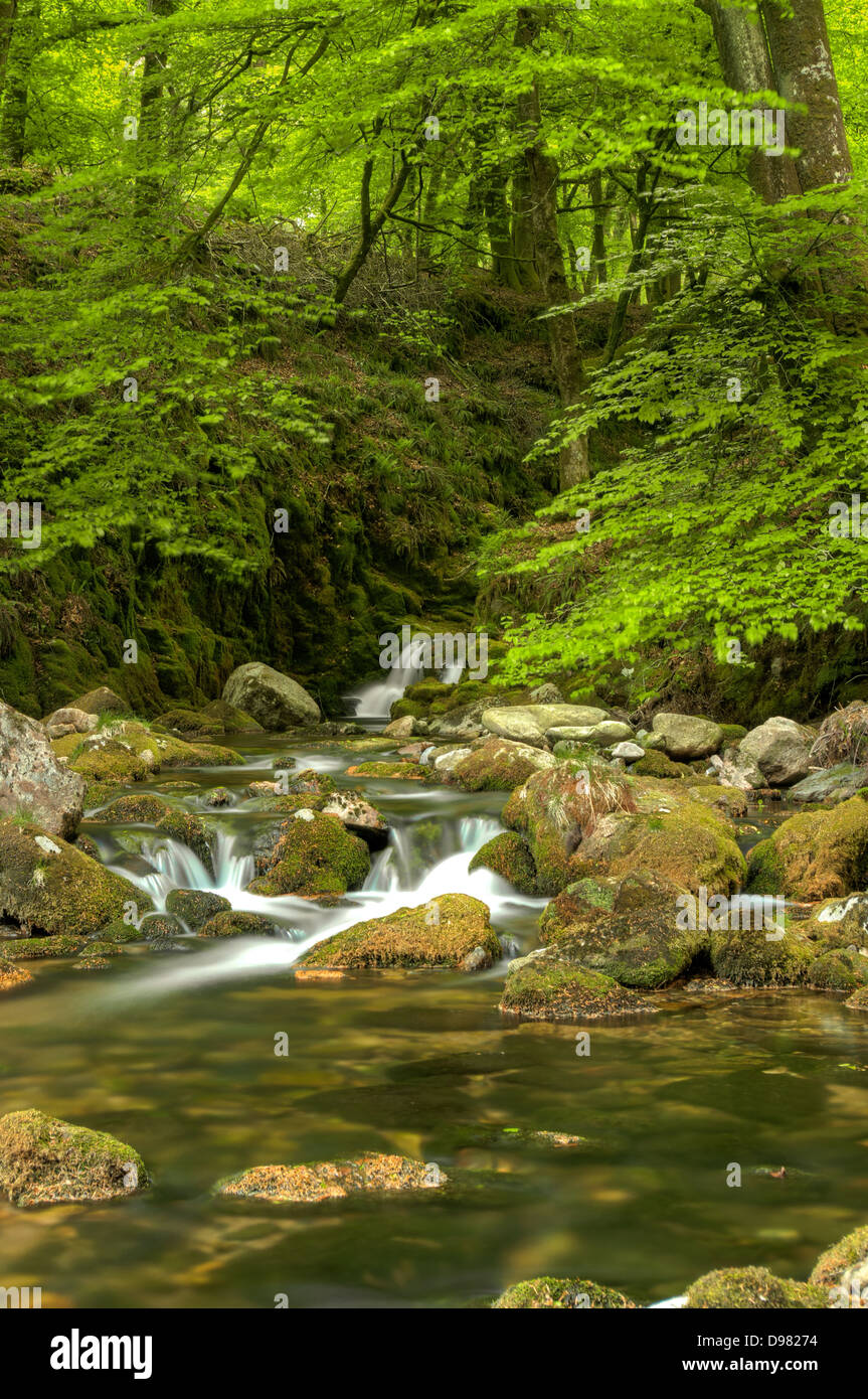 Whitewater rapids on the River Yealm in Dendles Wood National Nature Reserve, in Dartmoor National Park Stock Photo