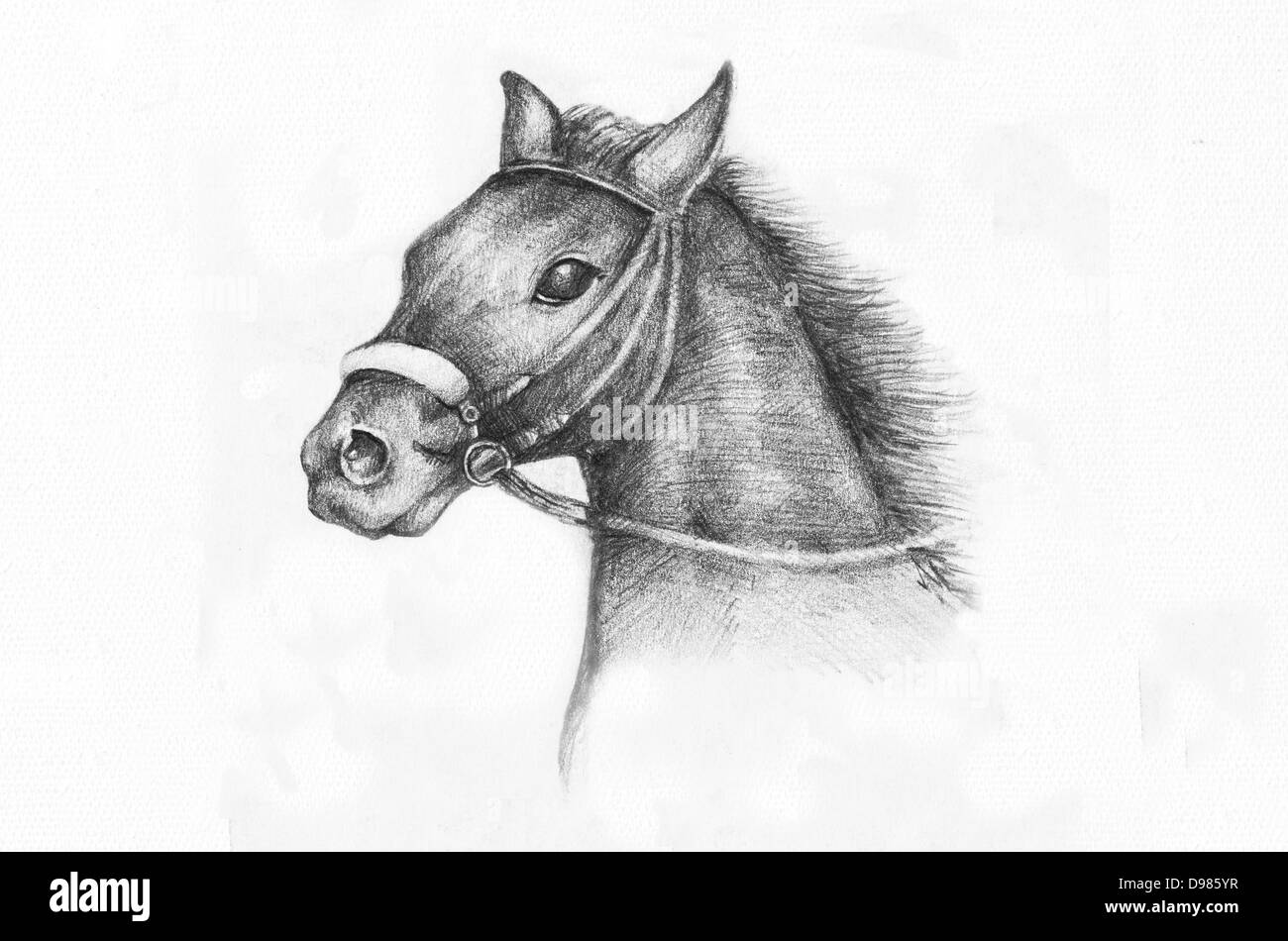 Horse drawing stock photos horse drawing stock images alamy for Disegni di cavalli a matita
