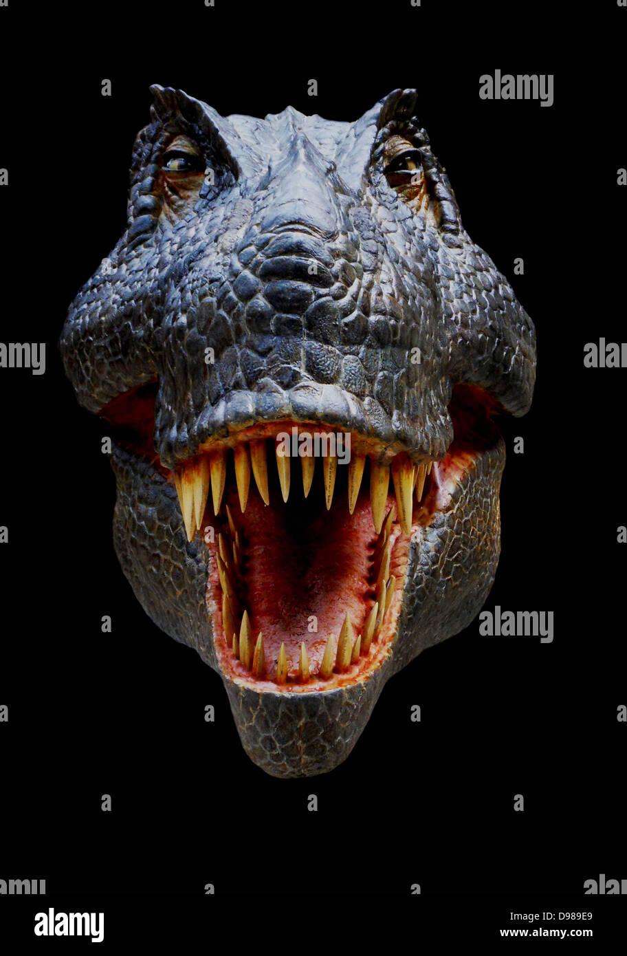 Reconstruction of the head of the Late Cretaceous dinosaur Tyrannosaurus rex - Stock Image