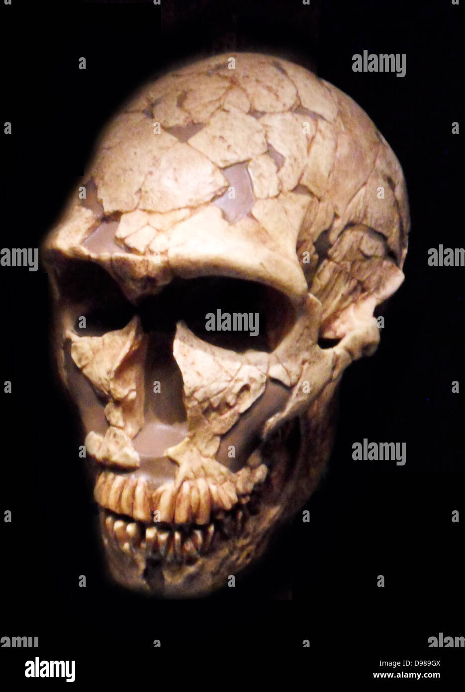 Hominid Stock Photos & Hominid Stock Images - Alamy