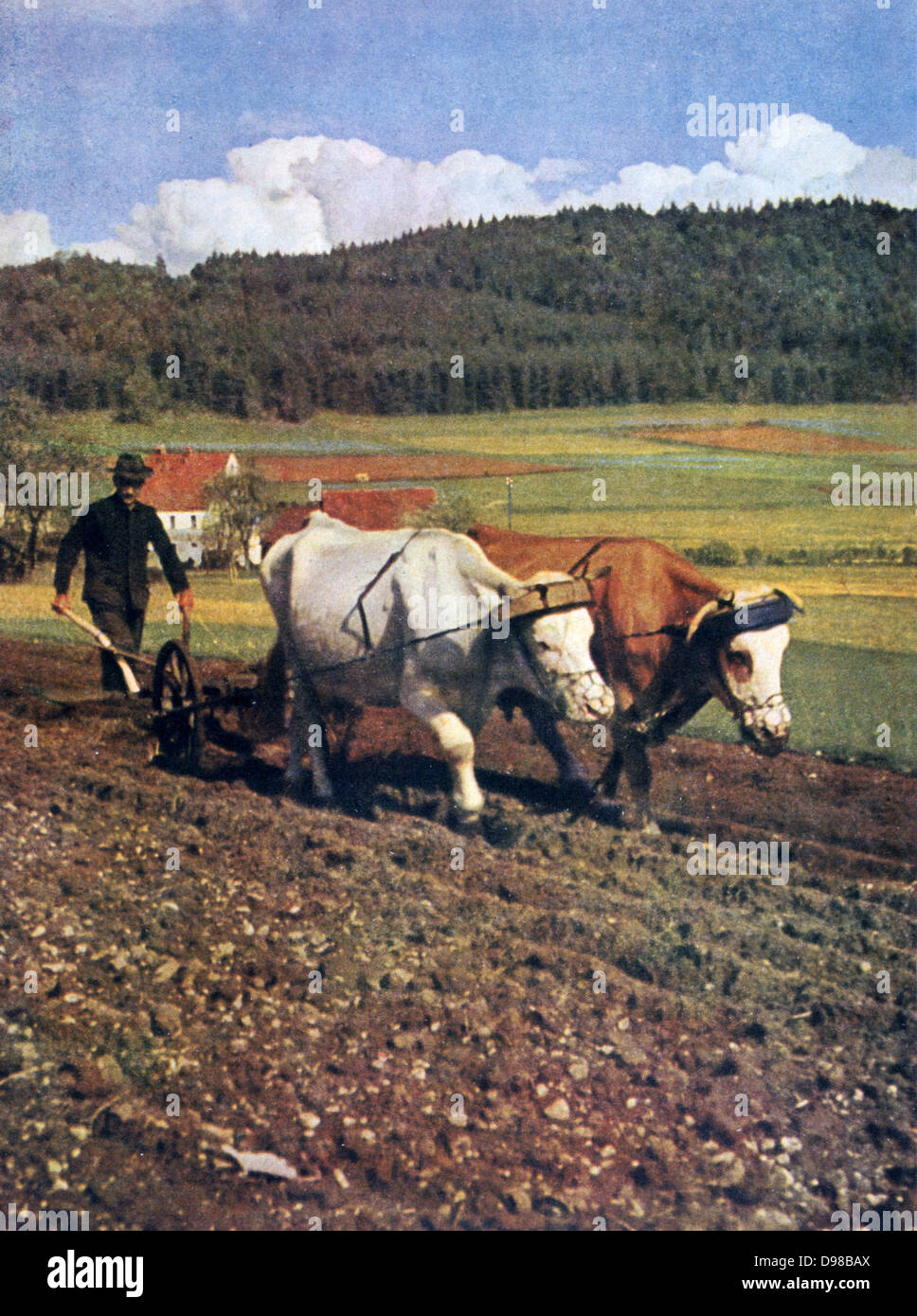 World War II 1939-1945:  Ploughing with oxen.  From 'Signal', April, 1943, German propaganda magazine produced - Stock Image