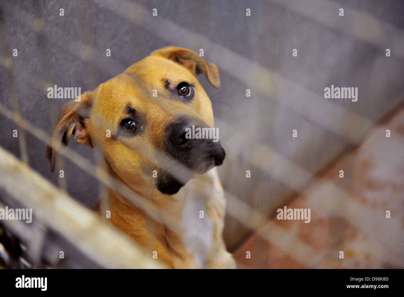 A dog at Cardiff Dogs Home, who faced overcrowding after Christmas. - Stock Image