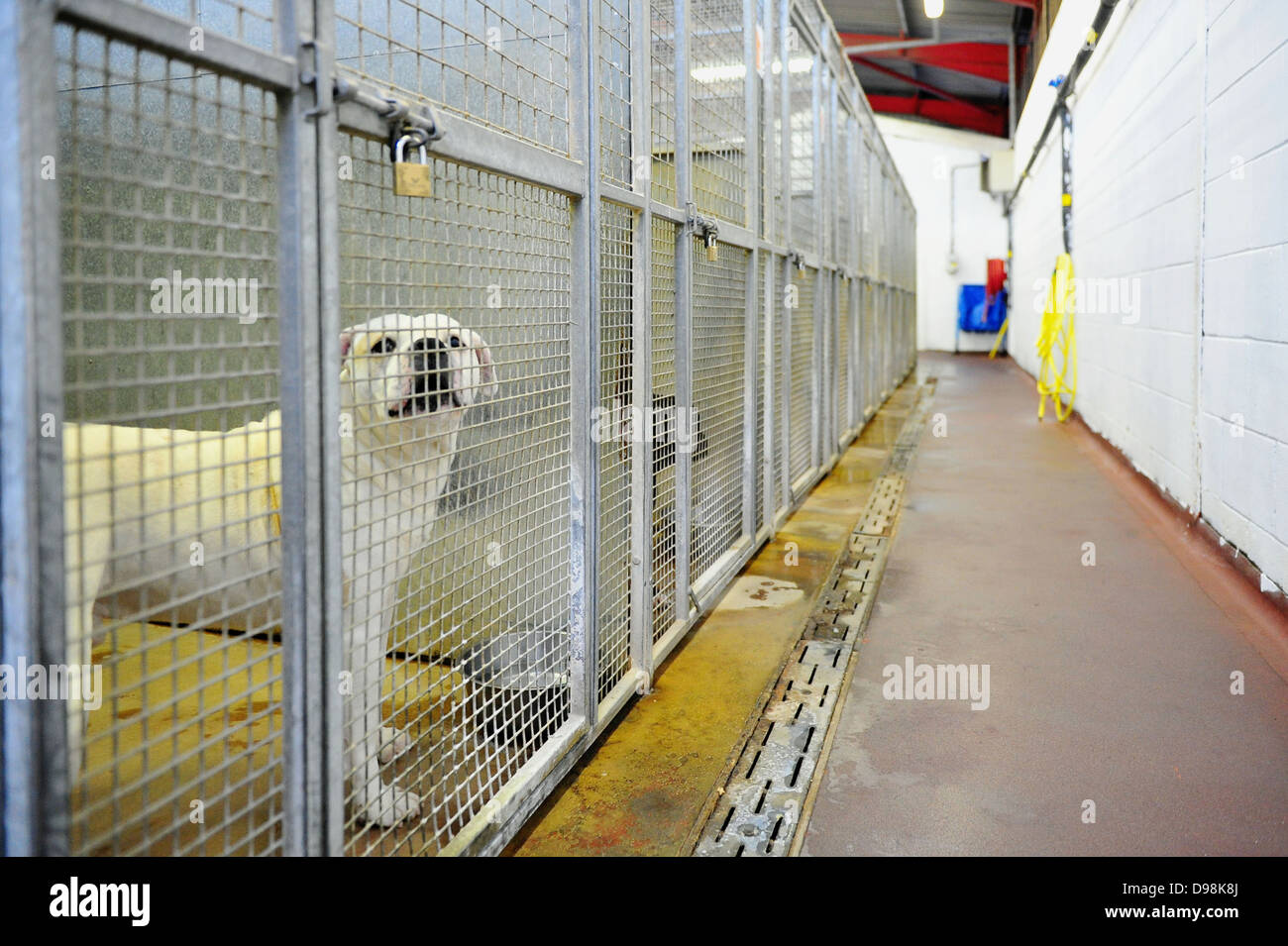 A dog at Cardiff Dogs Home, who faced overcrowding after Christmas. Stock Photo