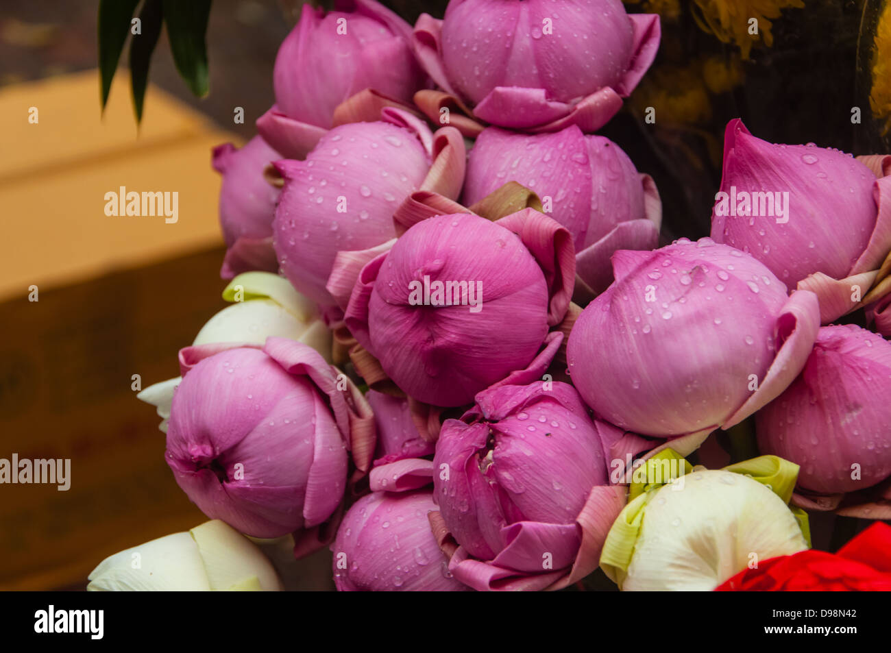 Pink And White Lotus Flower Buds For Sale In Market Stock Photo
