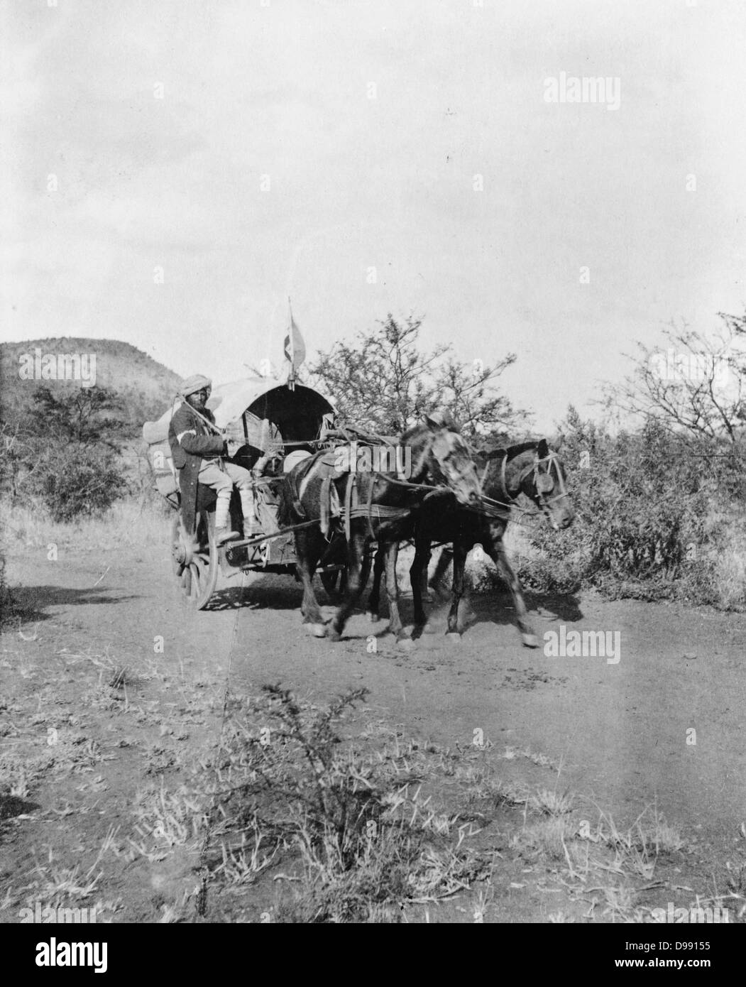 Second Boer War 1899-1902: Horse-drawn covered hospital cart with Indian driver used by British in South Africa - Stock Image