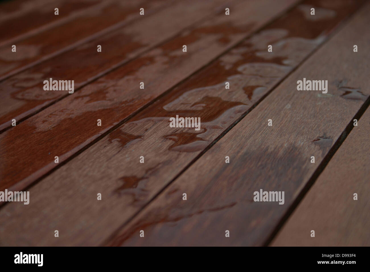 Water on boardwalk by Ben Phillips - Stock Image