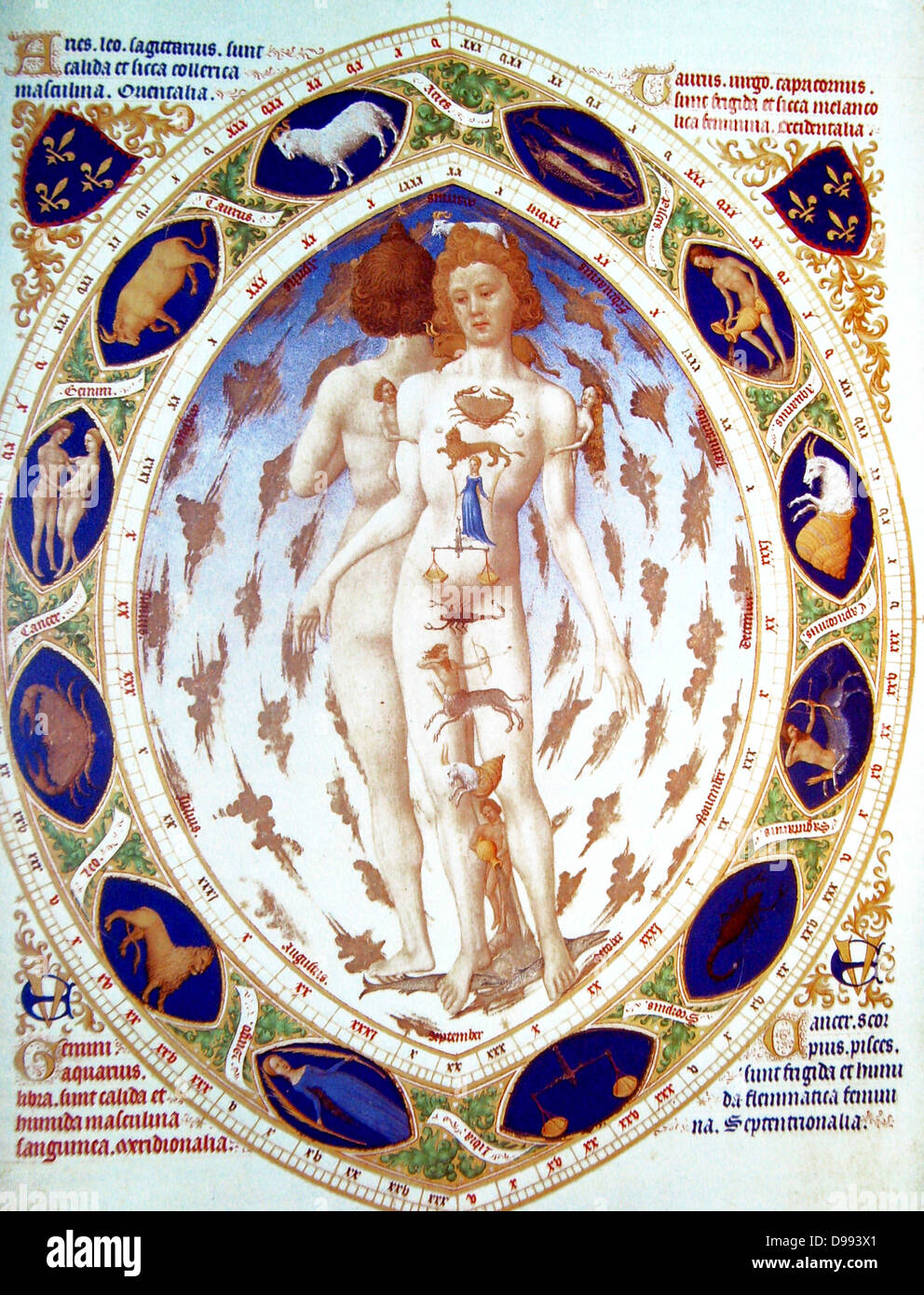 Melothesia' (zodiac man) from the 'Très Riches Heures 1413-1416, the Duc de Berry. Illumination on - Stock Image