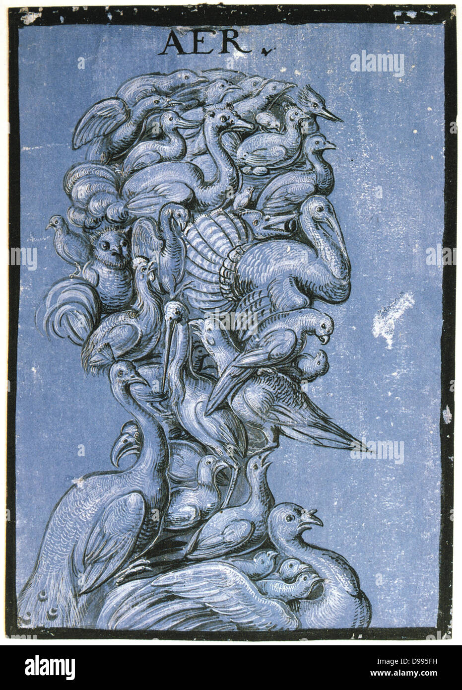 Air', c1600. Tempera on blue paper. Anonymous. Grotesque head and shoulders composed of various birds. - Stock Image